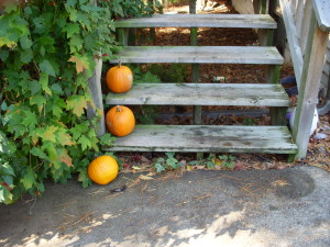 Pumpkins on the front steps