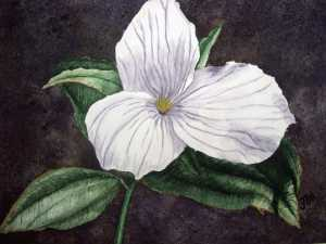 An original 2008 water color painting of a spring time trillium blossom.
