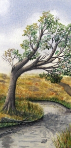An original 2009 watercolor painting of an oak tree hanging over a river on the prairie.