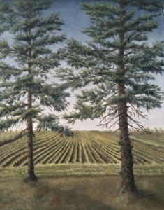 "Spring Planting is a 20""x16"" original oil painting on canvas of a spring field with seedlings as seen from a spruce shelter belt."